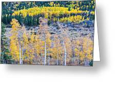 Rocky Mountain Autumn Contrast Greeting Card by James BO  Insogna