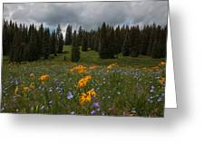 Rocky Mountain Bloom Greeting Card
