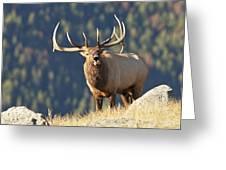 Rocky Mountain Bull Elk Bugling Greeting Card