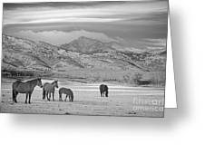 Rocky Mountain Country Morning Bw Greeting Card