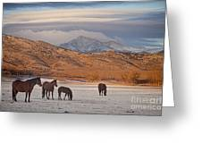 Rocky Mountain Country Morning Greeting Card