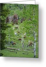 Rocky Mountain Elk Herd Greeting Card