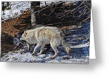 Rocky Mountain Encounter Greeting Card by Skye Ryan-Evans