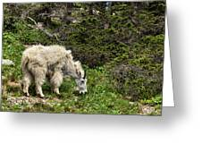 Rocky Mountain Goat Greeting Card