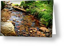 Rocky Mountain Stream Greeting Card