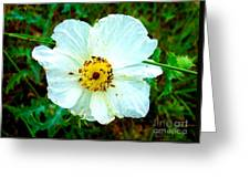 Rocky Mountain Wild Flower Greeting Card