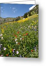 Rocky Mountain Wildflower Landscape Greeting Card