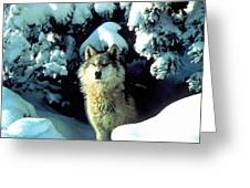 Rocky Mountain Wolf Greeting Card