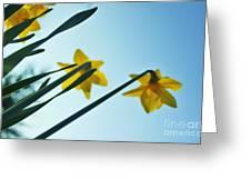 Rodchenko's Daffodils Greeting Card
