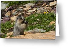 Rodent In The Rockies Greeting Card