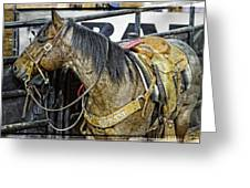 Rodeo Horse Two Greeting Card