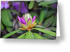 Rododendro Greeting Card