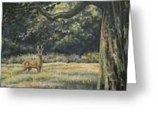 Spirit Of The Moment - Roe Buck Greeting Card