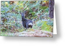 Roe Buck In Woodland Greeting Card