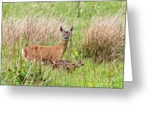 Roe Deer Capreolus Capreolus With Two Fawns Greeting Card