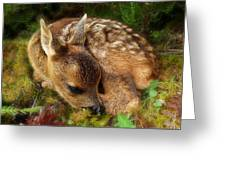Roe Deer Fawn Greeting Card