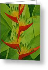 Rojo Sobre Verde Greeting Card by Diane Cutter