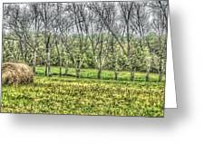 Roll In The Hay Greeting Card by Sarah E Kohara