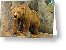 Rolling Hills Wildlife Adventure 1 Greeting Card