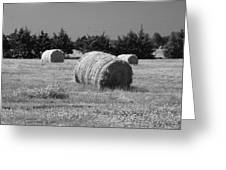 Rolling In The Hay Bw Greeting Card