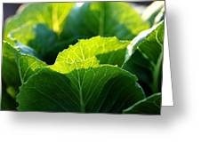 Romaine Study Greeting Card by Angela Rath