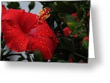 Romance In The Rain Greeting Card