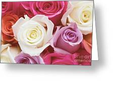 Romantic Rose Garden Greeting Card