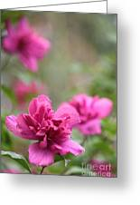 Romantically Pink Greeting Card