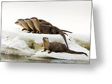 Romp Of Otters Greeting Card