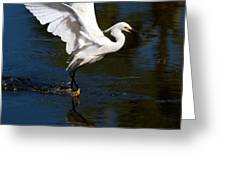 Rookery 15 Greeting Card