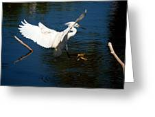Rookery 16 Greeting Card
