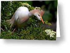Rookery 21 Greeting Card