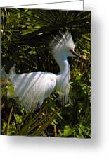 Rookery 9 Greeting Card