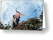 Rookery Great Blue Greeting Card