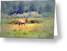 Roosevelt Bull Elk Greeting Card