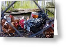 Rooster And Chickens Greeting Card