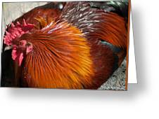 Rooster Colors Greeting Card