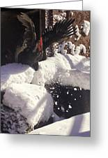 Rooster In Deep Snow Greeting Card
