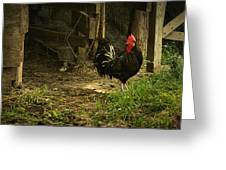Rooster In The Hen House Greeting Card