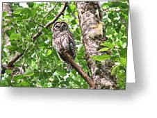 Roosting Owl Greeting Card
