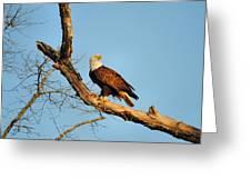 Roosting Tree 1 Greeting Card