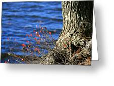 Rooted In Blue  Greeting Card