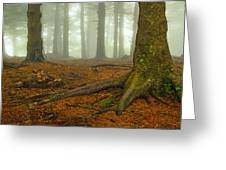 Rooted-pano Greeting Card