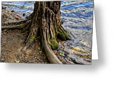 Rooted Greeting Card
