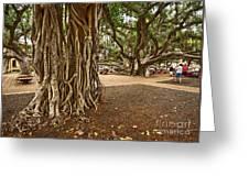 Roots - Banyan Tree Park In Maui Greeting Card