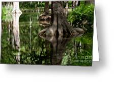 Roots Greeting Card by Barbara Shallue