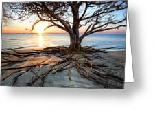 Roots Beach Greeting Card