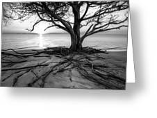 Roots Beach In Black And White Greeting Card