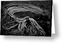 Roots Of A Fallen Tree By Wawa Ontario In Black And White Greeting Card
