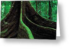 Roots Of A Giant Tree, Daintree Greeting Card
